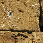 Detail of limestone building block, with embedded fossil shells